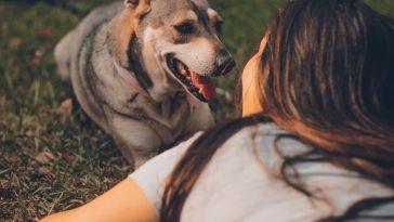 Pet Care Tips for New Pet Parents