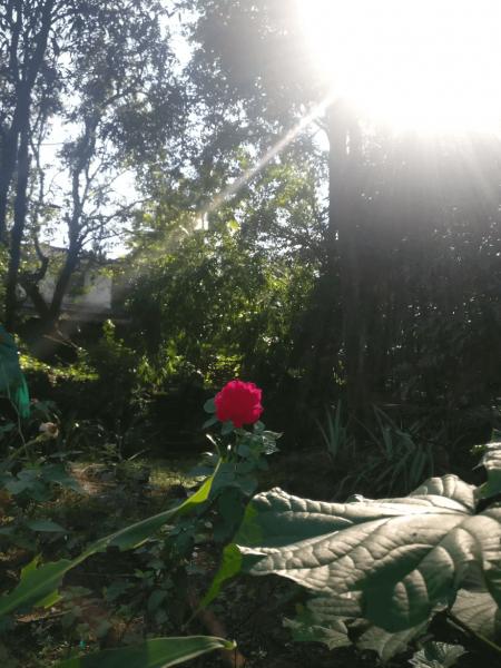 Konkan Garden