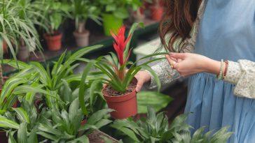 Amazing Garden Project Ideas