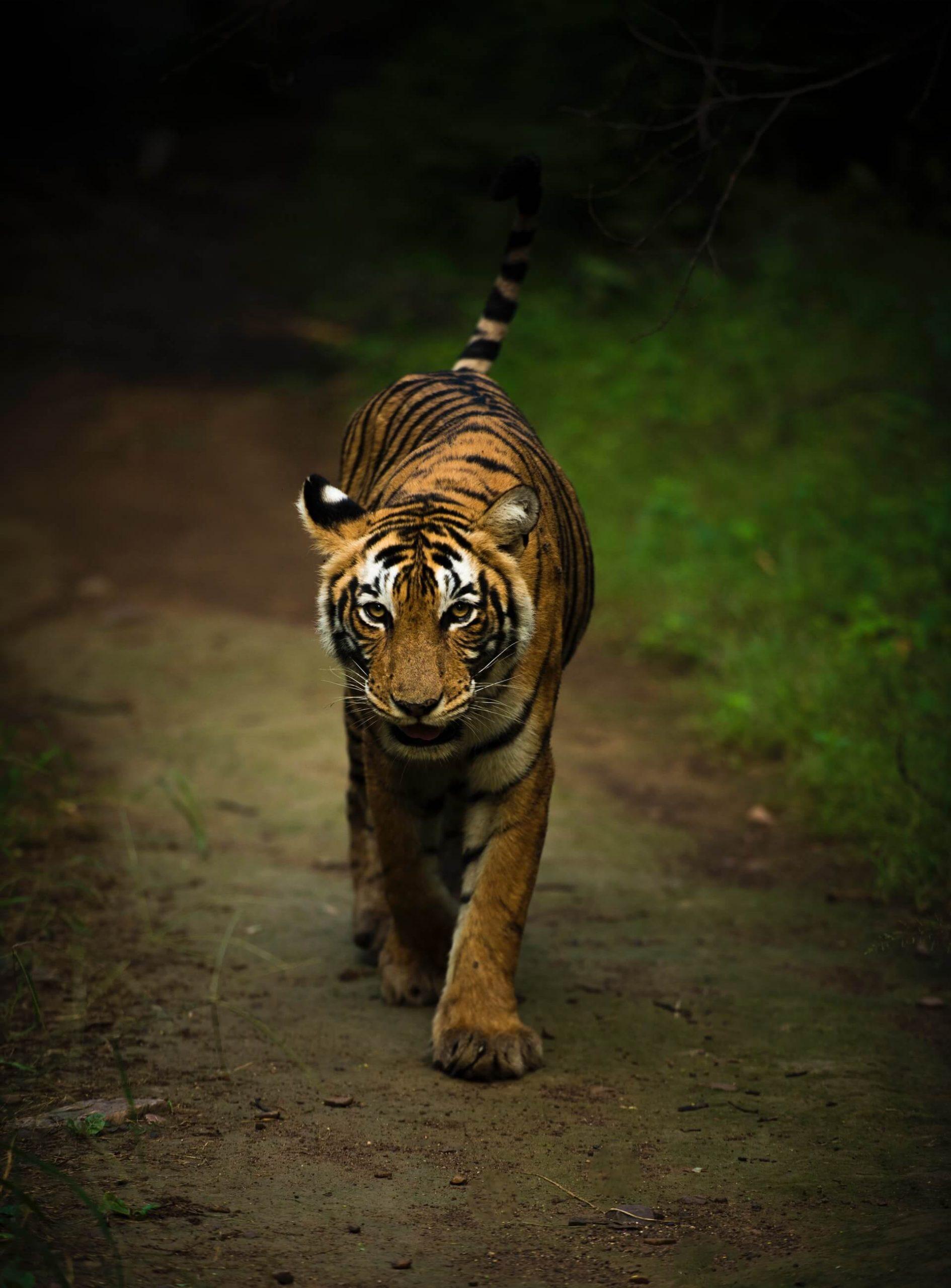 Ranthambore National Park Rajasthan India